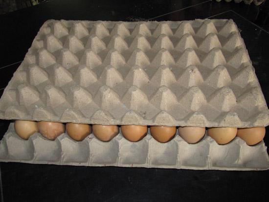 蛋托画/蛋托手工制作/蛋托手工作品/幼儿园蛋托手工制作/幼儿园蛋托作