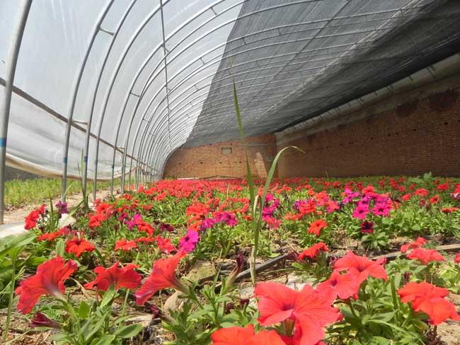花卉基地展示-宁夏花卉苗木|六盘山花卉苗木|花卉苗木